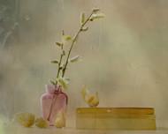 Physalis by Delphine Devos Floral Print