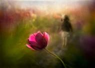 A Pink Childhood Memory by Shenshen Dou Floral Print