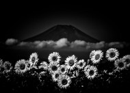 Sunflower Cloud and the Mountain by Takashi Landscape