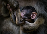 Clinging to Life by Pedro Jarque Wildlife