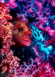 Coral Hind by Dani Marchana Marine