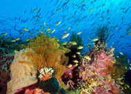 Reef at Cabilao by Henry Jager Wildlife