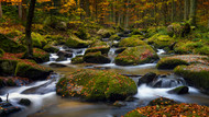 Autumn Waters by Norbert Maier Landscape Print