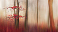 Red Leaves by Leif Londal Art Print
