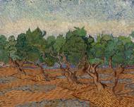 Vincent van Gogh Print Olive Grove