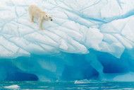 Polar Bear by Gil Raga Wildlife Print