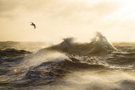 The Formidable Drake Passage by Justin Hofman Seascape Print