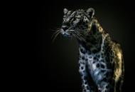 Vigilant by Pedro Jarque Wildlife Print