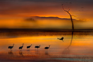 We are Here Waiting for You by Shensen Dou Wildlife Print