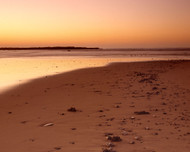 Brisket Pt Curve Beach Shells by Jeff Grant Seascape Print