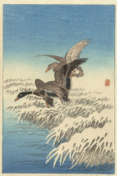 Japanese Print Flock of Ducks Fying Over Snowy Reeds by Ohara Koson b Wildlife