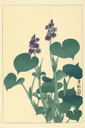 Japanese Print Flowering Hosta by Ohara Koson B Art