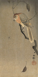 Buffalo Claw and Spider by Ohara Koson Japanese Woodblock