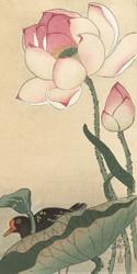 Gallinule with Lotus Flowers Japanese Woodblock