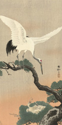 Japanese Crane Bird on Branch of Pine by Ohara Koson Japanese Woodblock
