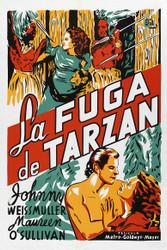 Tarzan Escapes 1936 Spanish Movie Poster