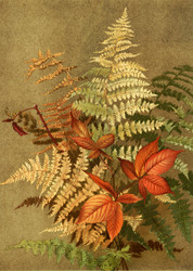 Autumn Ferns By Ellen T Fisher Floral Print