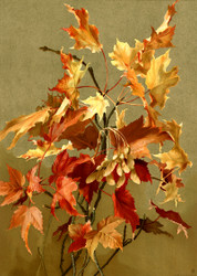 Autumn Leaves No 2 Maple By Ellen T Fisher Floral Print