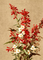 Cardinal Flowers  By Ellen T Fisher Floral Print