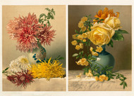 Chrysanthemums And Mareshal Niel Roses  By Mrs William Duffield Floral Print