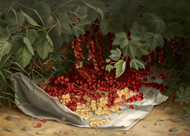 Currants by Virginia Granberry Floral Print