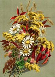 Daisies Clover Goldenrod And Autumn Leaves by Louise Clarkson Whitelock Floral Print
