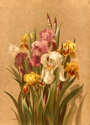 Fleur De Lis No 3 by  Ellen T Fisher Floral Print