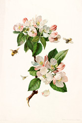Apple Blossoms And Bees By Alois Lunzer Floral Print