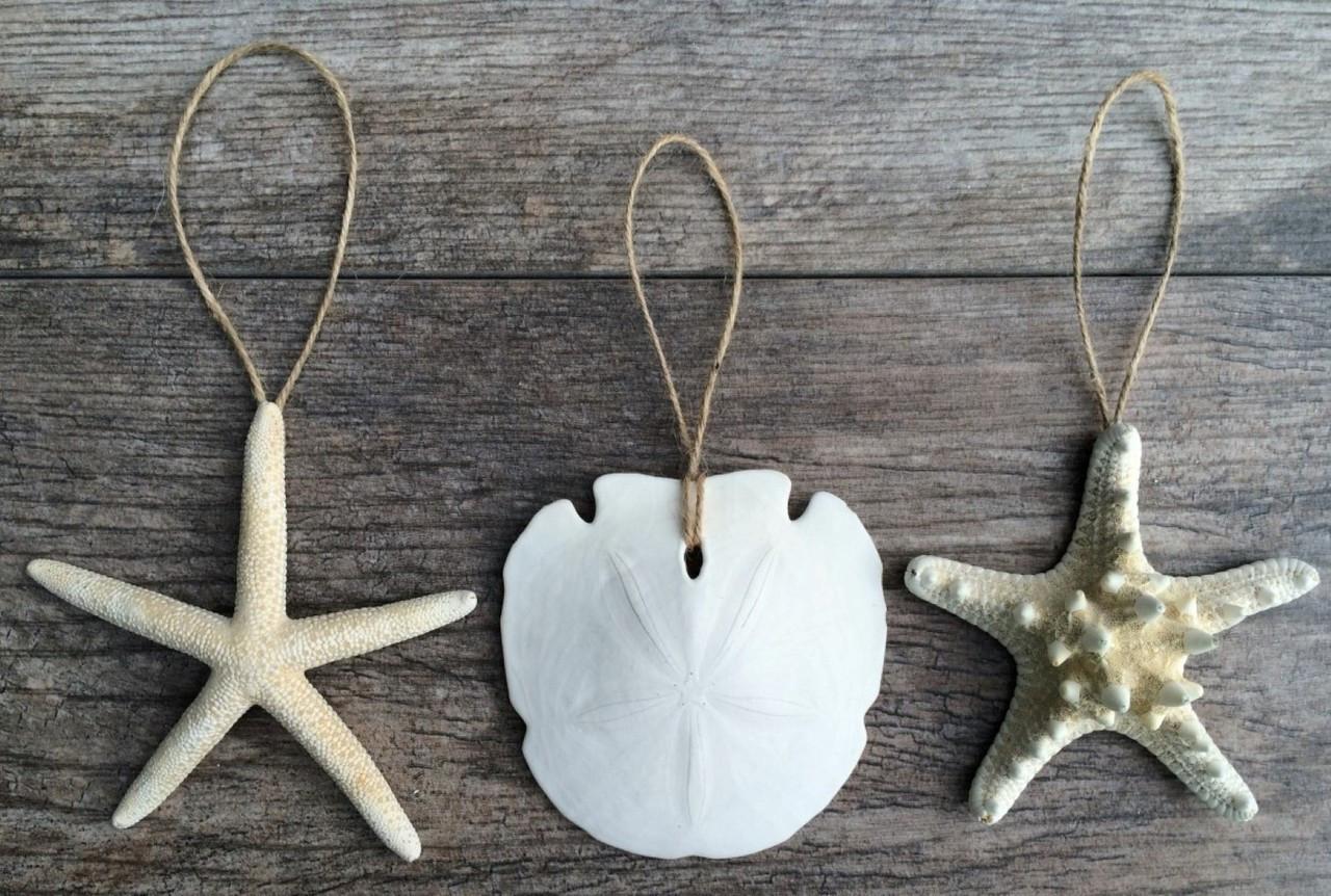 Sand dollar ornament - Starfish And Sand Dollar Ornament Set 4 5 3
