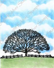 Heidi's Tree