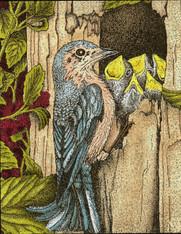 Bluebird with Babies