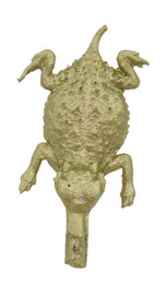 "1"" Horny Toad"