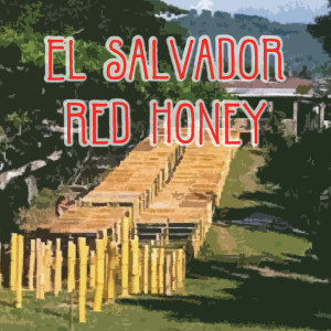 El Salvador Petite Honey Coffee