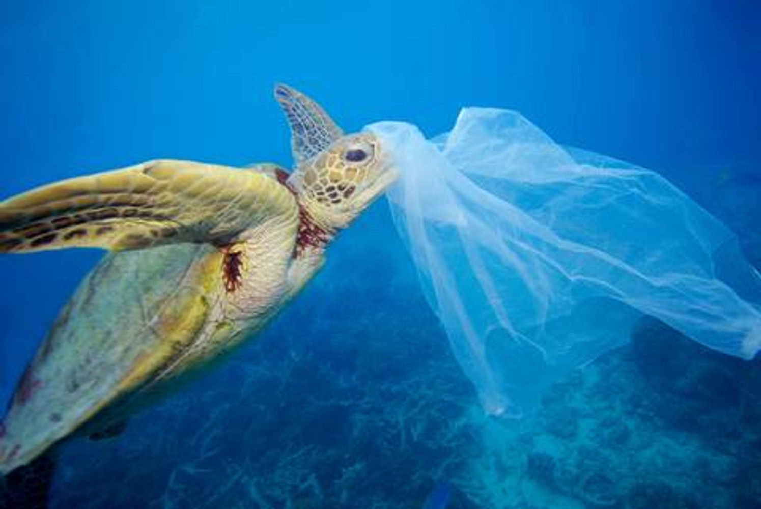 How do plastic bags impact our environment?