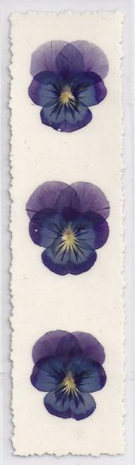 WF Purple Peace