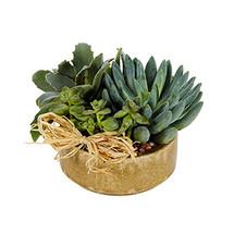 Succulent Garden - Small