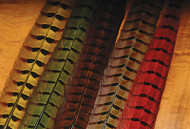 Ring-Necked Pheasant Tail Feathers