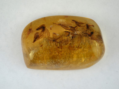 Amber gemstone contains at least six winged insects (probably ants), three insect larvae, and a beetle. Pine bark is on the reverse side.
