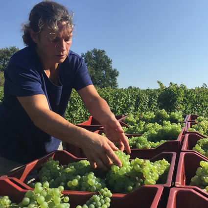 Harvest 2016 - Hand Picked Whites