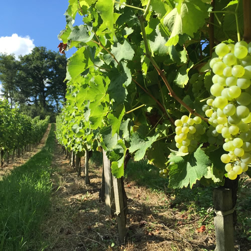 Sauvignon Blanc 2015