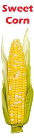 Banner Vertical Sweet Corn