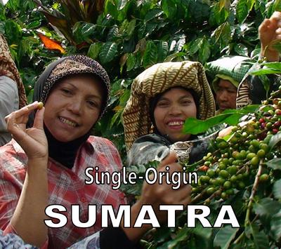Sumatra Single-Origin Fair-Trade Ketiara Cooperative - Medium Roast Coffee