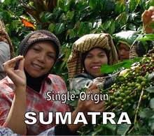 Sumatra Single-Origin Fair-Trade Ketiara Cooperative - Medium Roast Coffee
