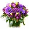 Jewel Box in Purple