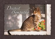 SYMCAT7 - Sympathy Card