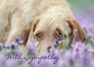 SYMDOG9 - Sympathy Card
