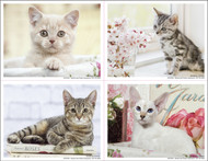 4CATMIX4 - 4 Up Reminder Cards