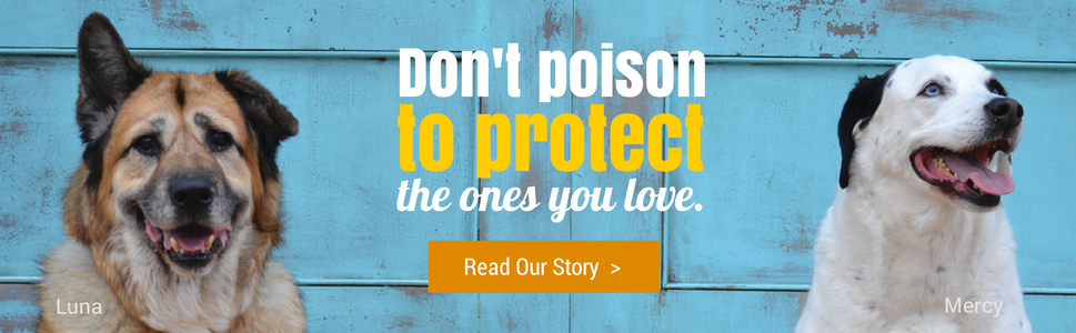 Don't Poison to Protect the Ones You Love