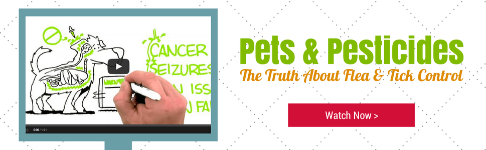 Pets & Pesticides: The Truth About Flea & Tick Control