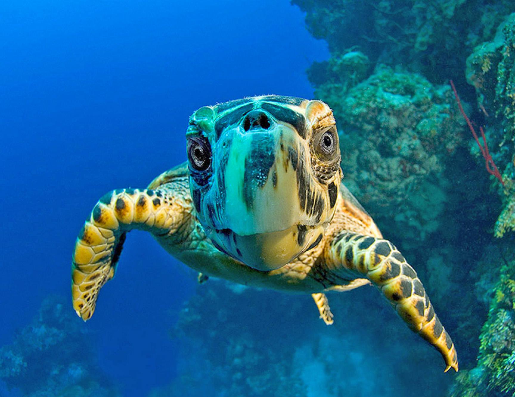 cayman-turtle.jpg
